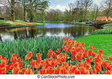 Keukenhof Flower Garden, Netherlands