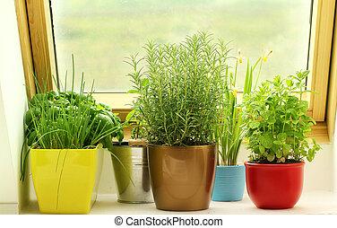 keukenkruiden, groeiende, op, venster