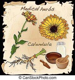 keukenkruiden, medisch, collection., calendula.