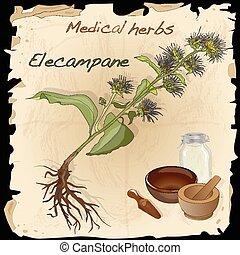 keukenkruiden, medisch, collection., vector., elecampare