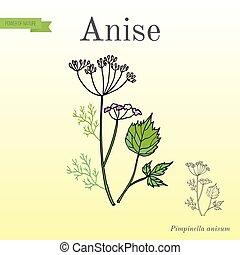 keukenkruiden, verzameling, anise, aromatisch