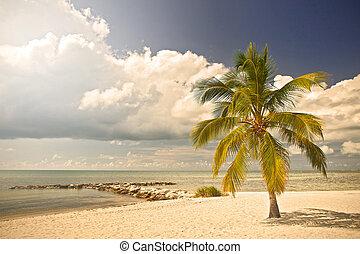 Key WEst, Florida Keys USA - Summer at a tropical paradise...