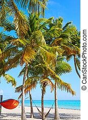 Key west florida Smathers beach palm trees US