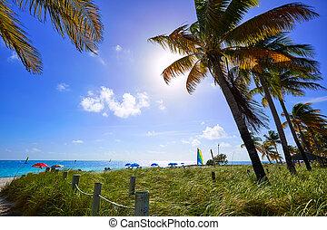 Key west florida Smathers beach palm trees US - Key west ...