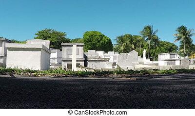 Key West Grave yard Iguanas