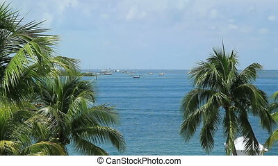 Key West Ocean View time lapse between two palm trees...
