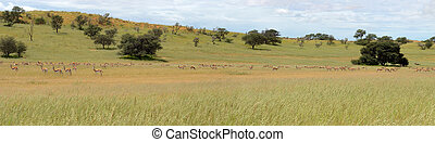 Kgalagadi animal panorama