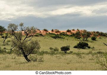Kgalagadi dune landscape - Dune landscape in the Kgalagadi...