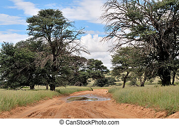 Kgalagadi road landscape