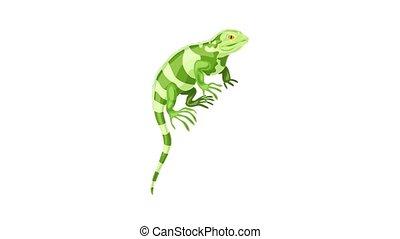 Khameleon reptile icon animation best on white background for any design