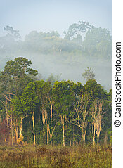 Khao Yai National Park, Tropical forest in Thailand