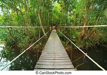 khao, yai, parco, tailandia, ponte, nazionale, giungla