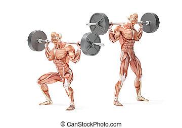 ki kézi súlyzó, guggol, exercise., anatómiai, 3, illustration., elszigetelt, noha, nyiradék út