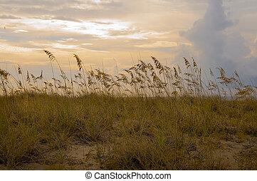 Sand dunes of Kiawah