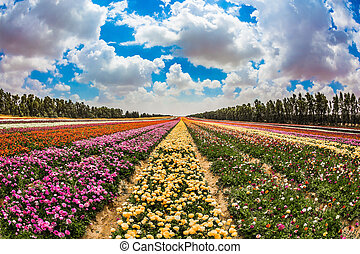 kibbutz, fält, bredvid, den, gaza remsa