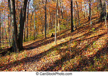 Kickapoo State Park Illinois