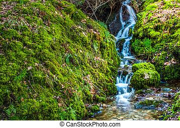 kicsi, eredet, vízesés, erdő