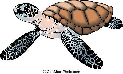 kicsi, tengeri teknős