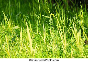 kicsi, vibráló, fű, dof, zöld