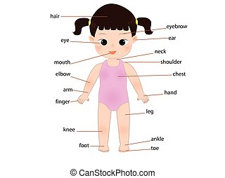 kid anatomy