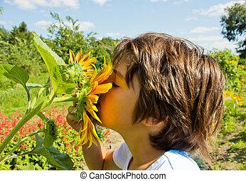 boy in summer colorful garden sniffing sunflower