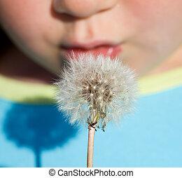 Kid blowing dandelion seeds - closeup