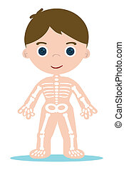 kid bones chart for school learning