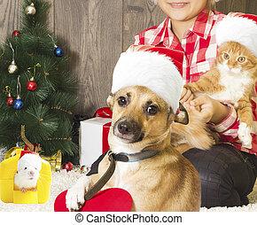 kid, christmas and pets