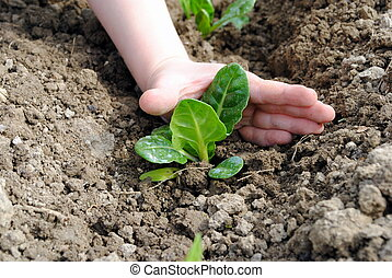 kid hand with seedlings in the garden