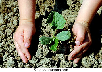 Kid hands plant a seedling in the garden