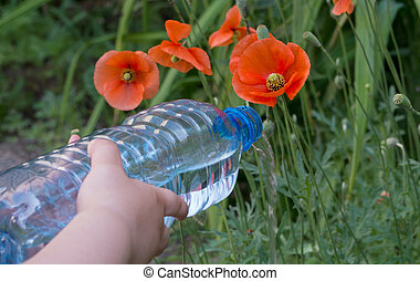 Kid hands watering with a thin stream of water from plastic bottle red poppy flowers growing among the grass