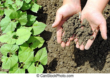 kid hands with soil in the garden