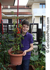 Kid in his urban garden with red tomatoes in the plant pot