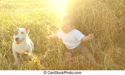 kid in the white shirt plays with a dog in a haystack in a field