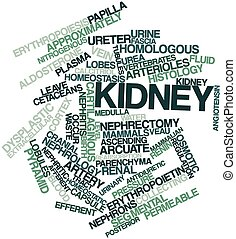 Kidney - Abstract word cloud for Kidney with related tags...