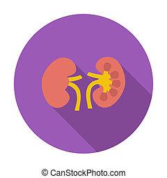 kidney., mänsklig