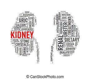 Kidney shape wordcloud wordtag - Illustration of kidney...