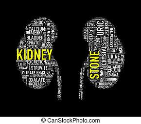Illustration of kidney shape wordcloud word tags presenting kidney stone diseases