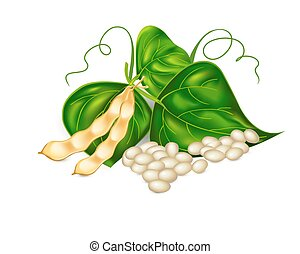 Kidney ( soy ) beans with leaves on white background. Vector...