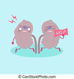 kidney with health concept