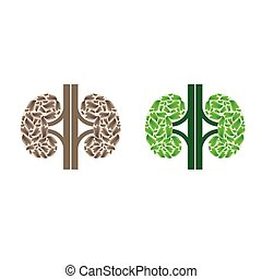 Kidneys silhouette with leaves
