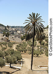 Kidron Valley and the Mount of Olives in Israel