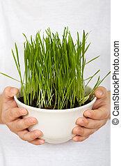 kids, миска, держа, руки, выращивание, трава