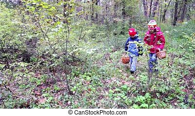 kids are looking for mushrooms in the forest