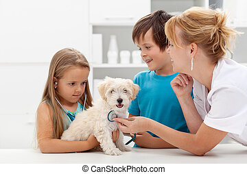 Kids at the veterinary doctor with their pet - checking the...