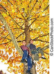 kids climbed on tree
