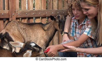 Kids Feeding Goats At Farm