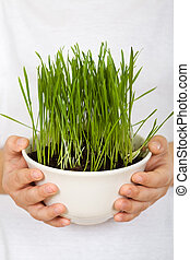 Kids hands holding grass growing in a bowl