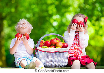 Kids picking fresh apples - Child picking apples on a farm...