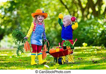 Kids picking vegetables on organic farm - Two children...